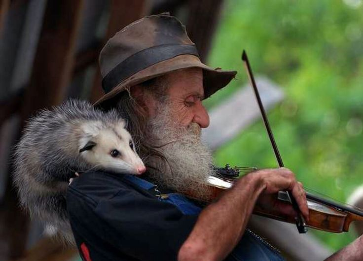 14be73aea6c47cef856623221c048a40--musician-gifts-opossum
