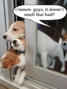 1a8ac830829cb938ca62962b276260dc--funny-dog-pictures-funniest-pictures