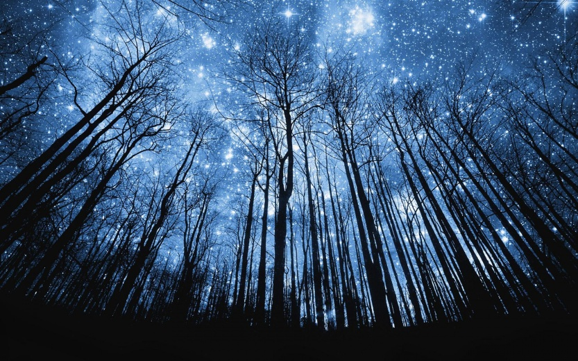 starry night through forrest