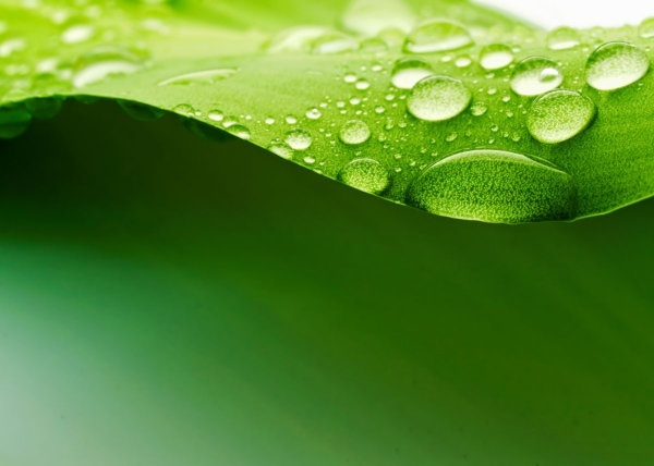 green_leaf_drops_hd_picture_5_169177