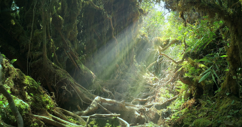 sun-light-rays-and-beams-shine-through-jungle-forest-canopy-on-mossy-tree-roots_stzn7ljrx_thumbnail-full05.png