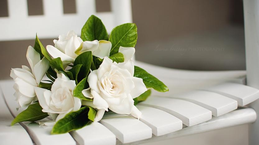 gardenialeadcropped1200x675.jpg