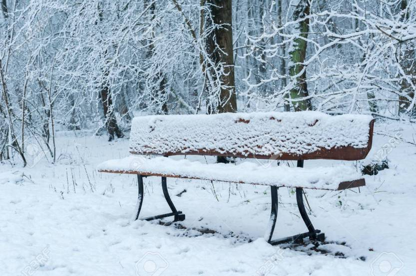 92272719-empty-bench-in-the-forest-under-the-snow-in-winter.jpg